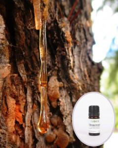 Bosvelijų (smilkalinių)  eterinis aliejus