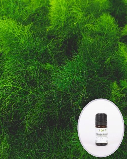 Krapų žolės eterinis aliejus