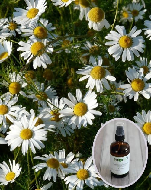 Ramunėlių vaistinių  hidrolatas