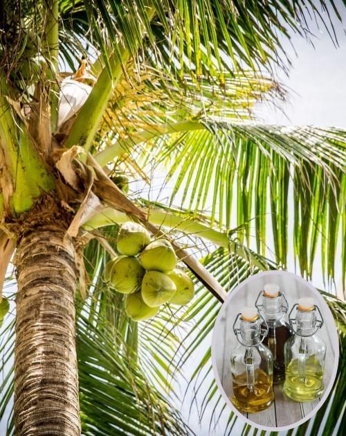 Frakcioniuotas kokosų aliejus